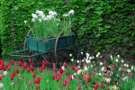 How to make a cottage garden?