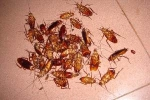 How to get rid of cockroaches ?