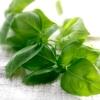 How to grow basil ?