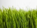 How to plant grass in your garden